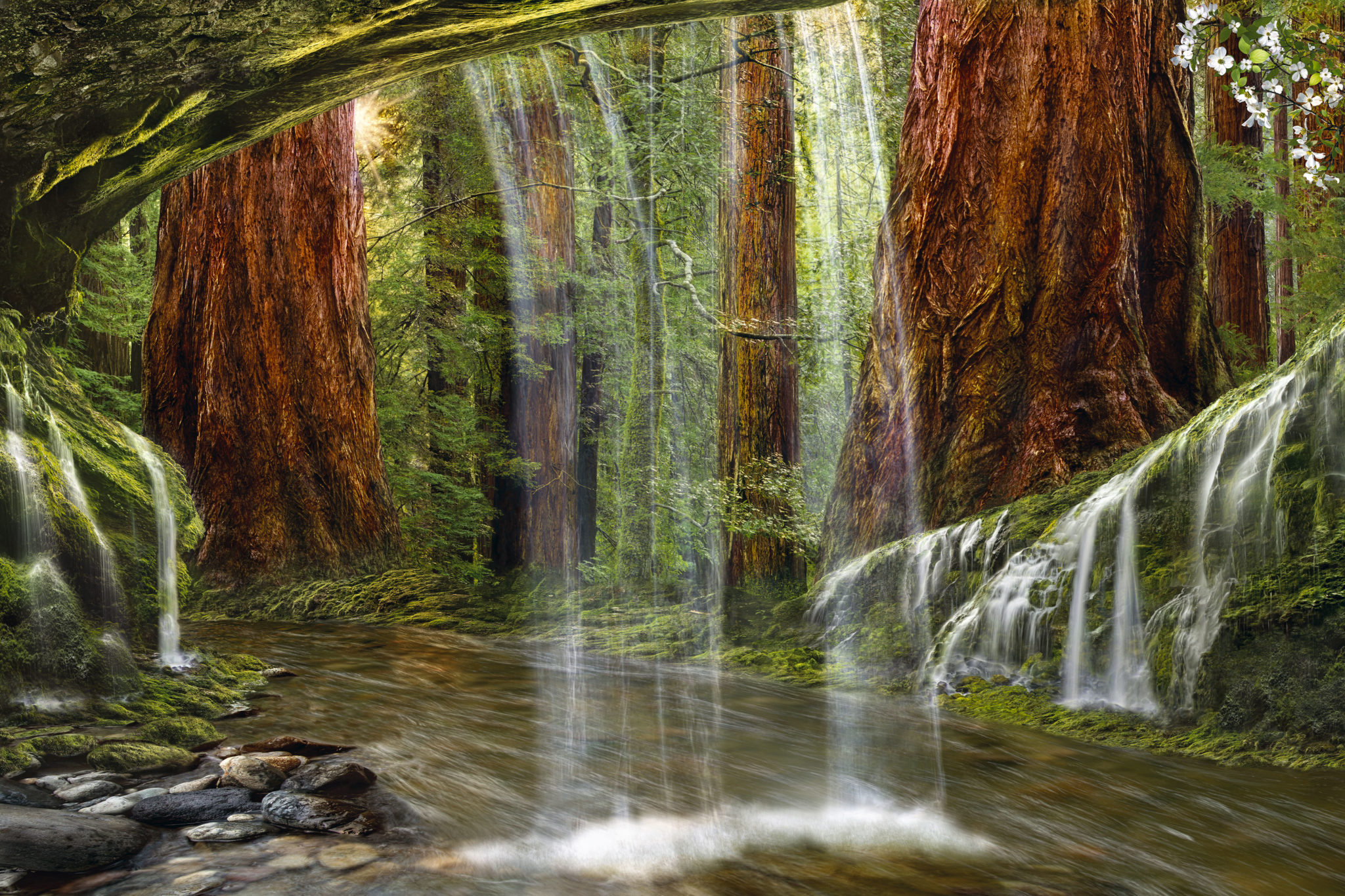 IDYLL SEQUOIAS Redwood National Park, California Limited Edition - 995 Artist Proof - 45