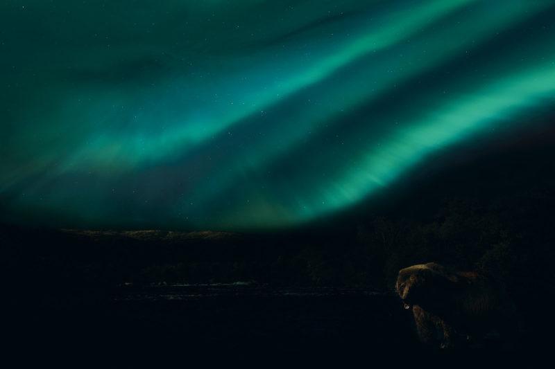 Ursine Quest by Ian Ely