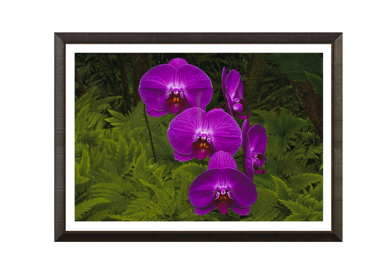 ORCHID_DARK-ASH-601-W_WHT-LINER3.png